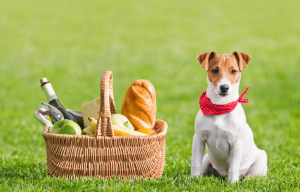 dog-picnic-outdoors